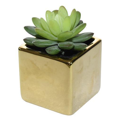 Sukulent MagicHome SA3905, 15 cm, črepník- keramika, zlatý
