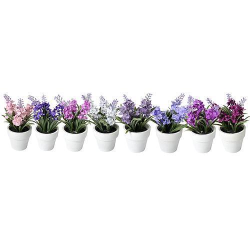 Levandule sukulent, Mix MagicHome, 15-20 cm, kvetináč - papier, sellbox, 8 ks